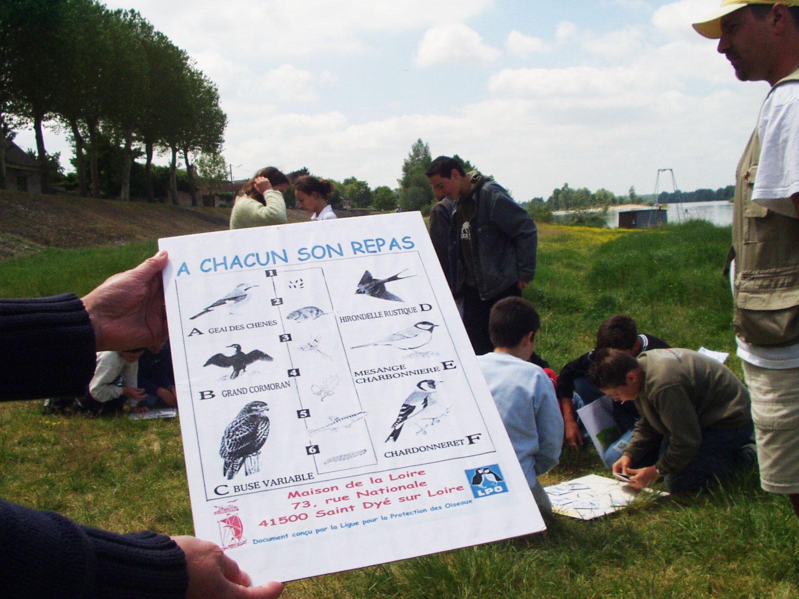 """Sortie """"Nature"""" : Oiseaux des bords de Loire"""