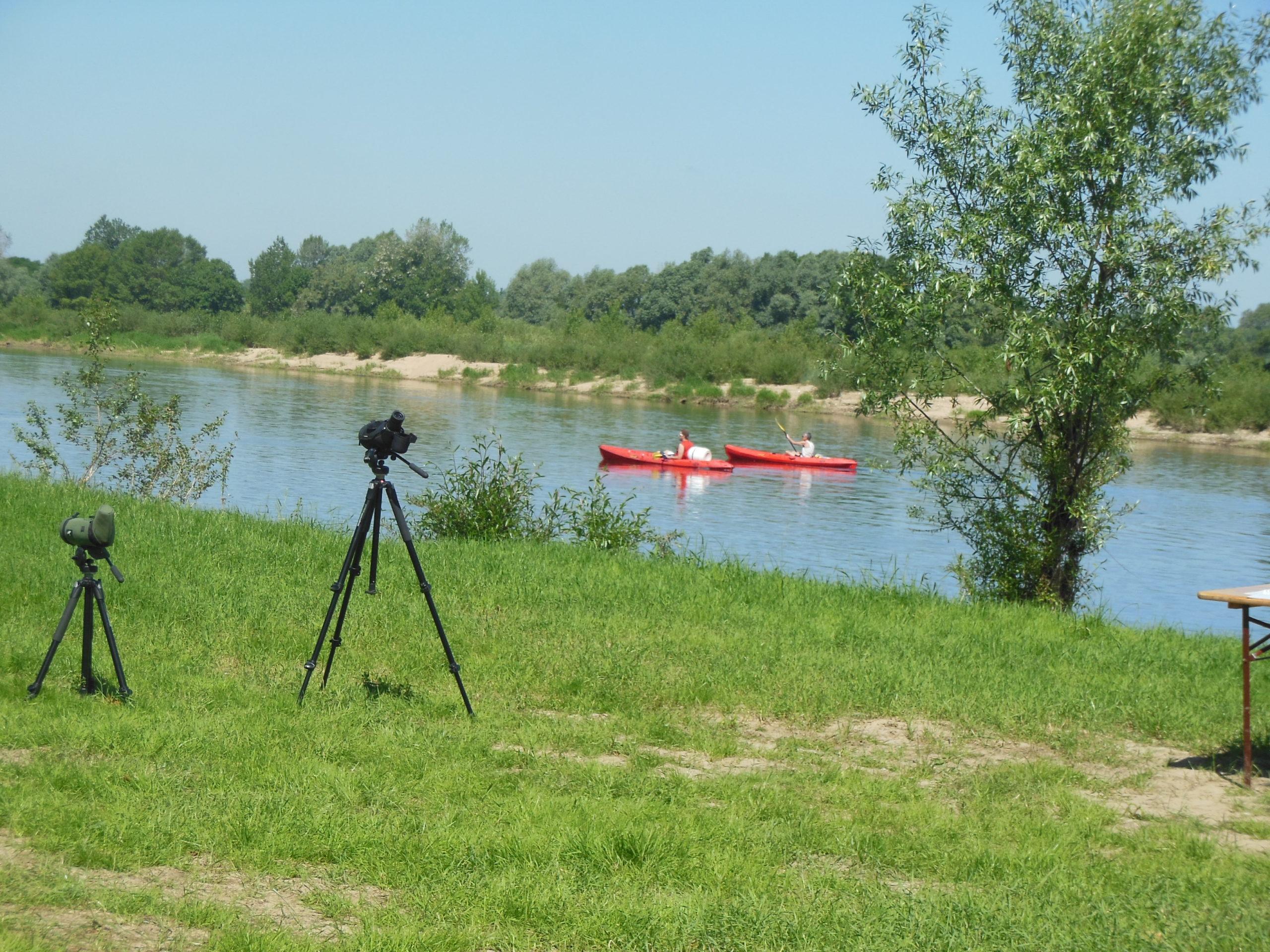 Dimanche 6 septembre : animation << oiseaux des bords de Loire >>