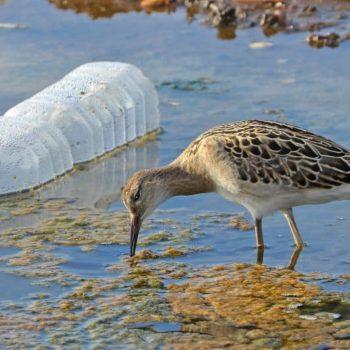 Prélèvement des micro plastiques dans la Loire, les résultats !